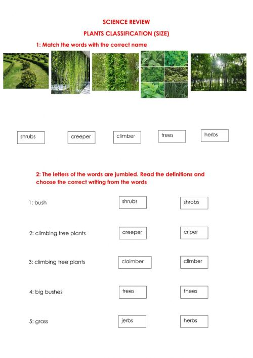 small resolution of Plants Size Classification worksheet