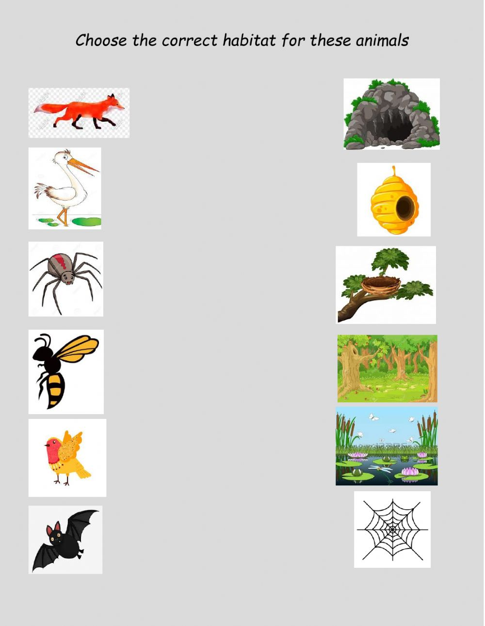 hight resolution of Animal habitats online activity