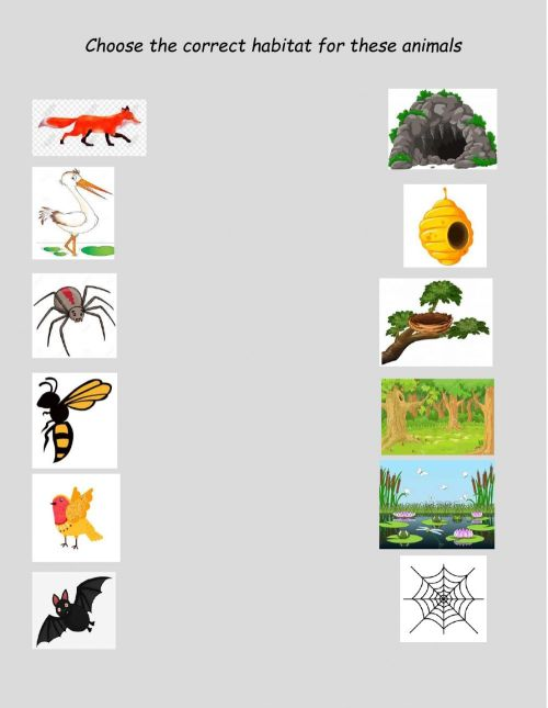 small resolution of Animal habitats online activity