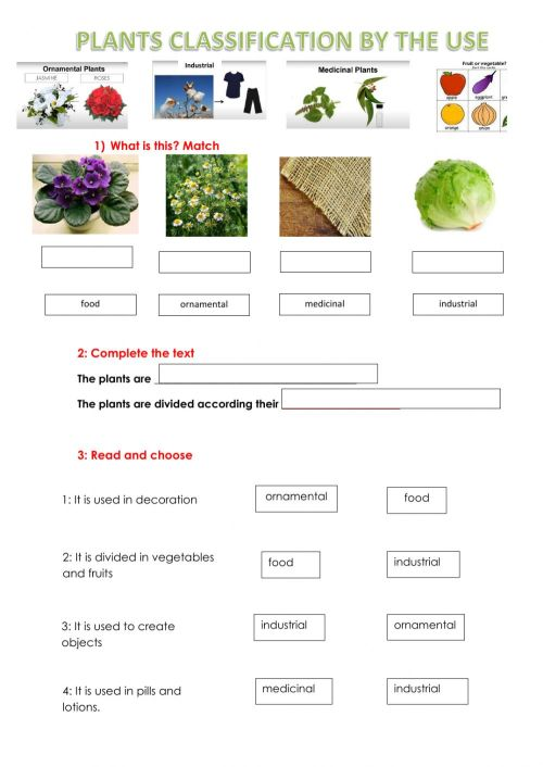 small resolution of Plants Use Classification worksheet
