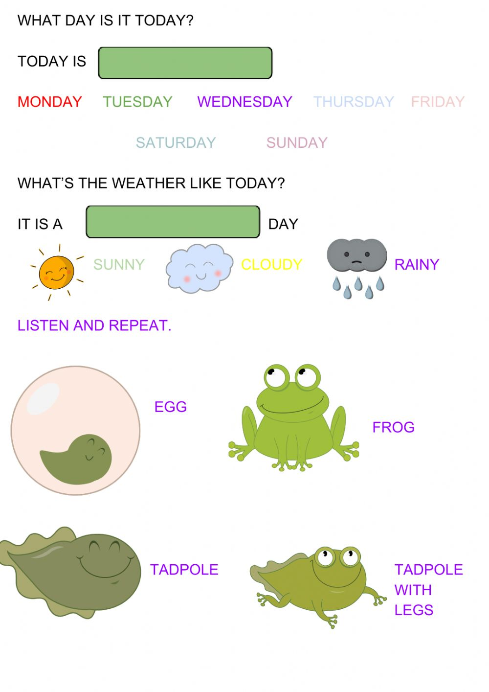hight resolution of Frog life cycle interactive worksheet