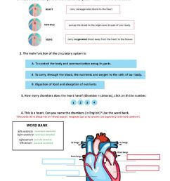 Circulatory system worksheet for 6 [ 1413 x 1000 Pixel ]