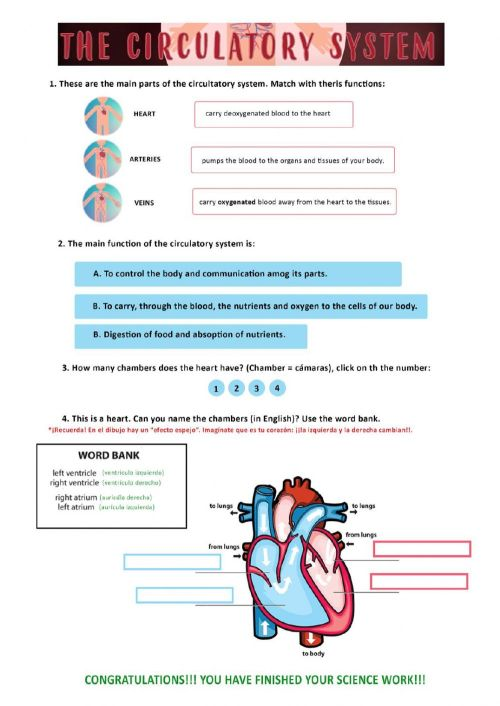 small resolution of Circulatory system worksheet for 6