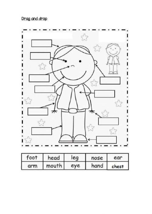 small resolution of Body Parts online exercise for 1 st grade