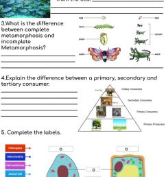 Grade 6 Revision term 1 \u0026 2 worksheet [ 1600 x 1000 Pixel ]