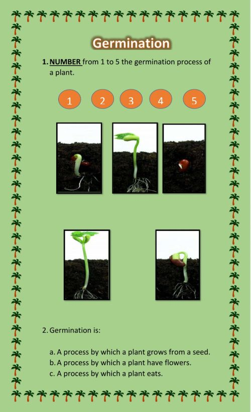 small resolution of Germination interactive worksheet