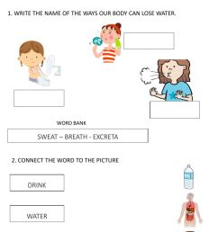Water to the body worksheet [ 1443 x 1000 Pixel ]