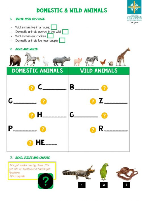 small resolution of Domestic and Wild Animals exercise
