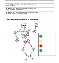 Skeletal \u0026 Muscular system worksheet [ 1643 x 1000 Pixel ]