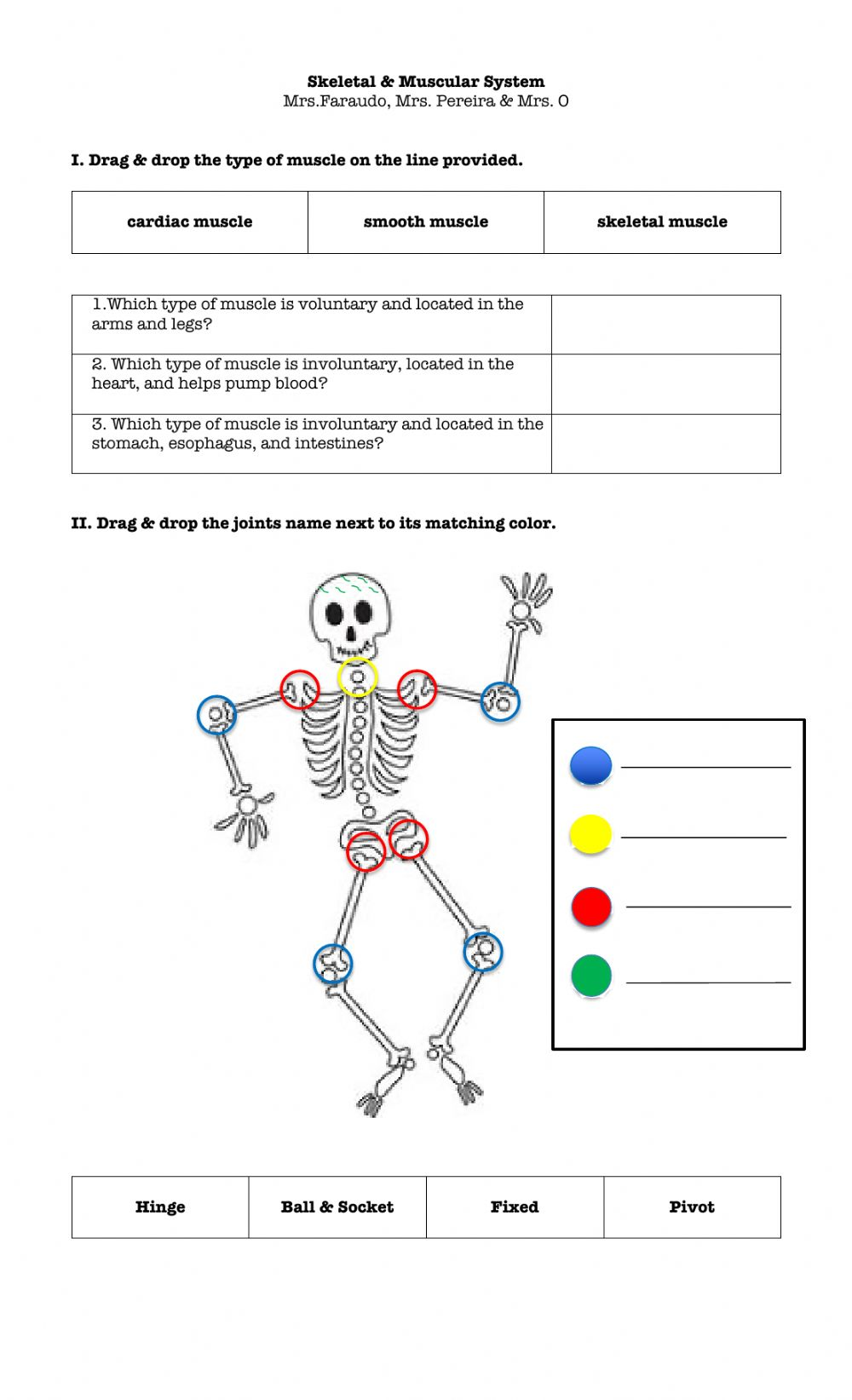 hight resolution of Skeletal \u0026 Muscular system worksheet