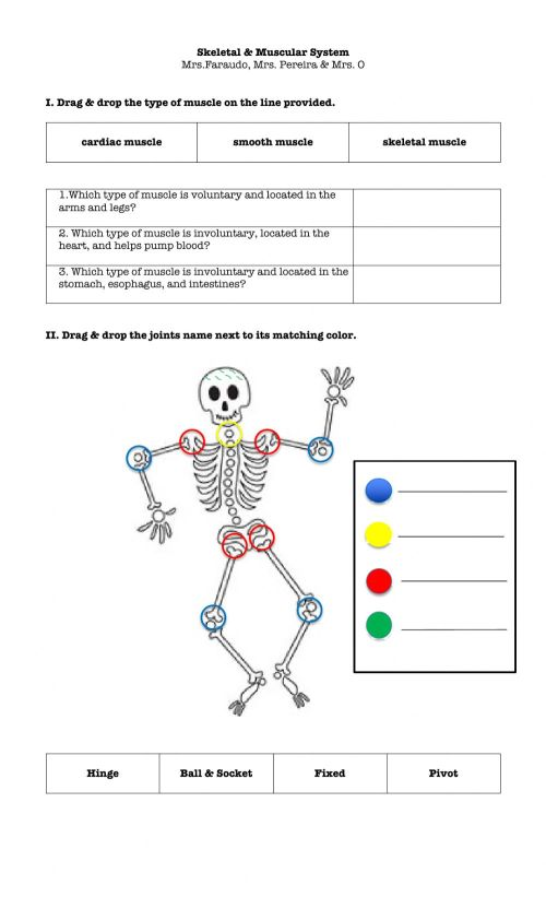 small resolution of Skeletal \u0026 Muscular system worksheet