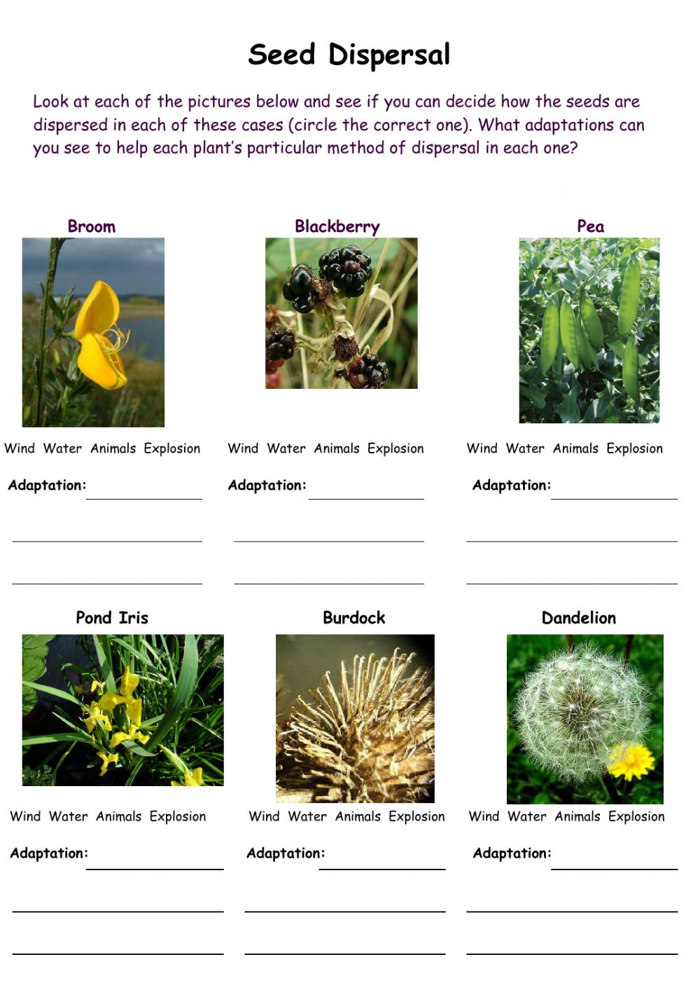 hight resolution of Seed Dispersal interactive worksheet