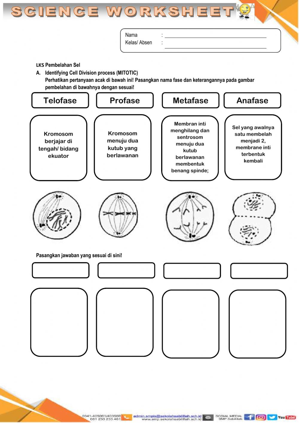 hight resolution of Cell division worksheet
