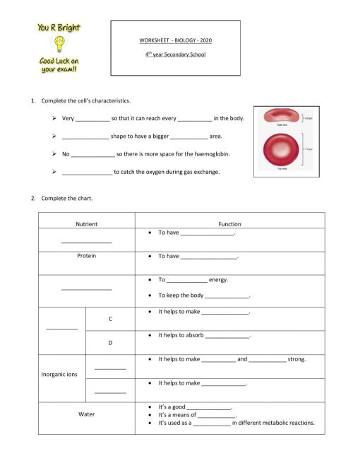 small resolution of Biology interactive worksheet