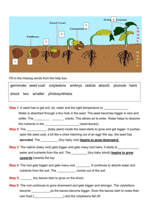 small resolution of Germination - Plants worksheet