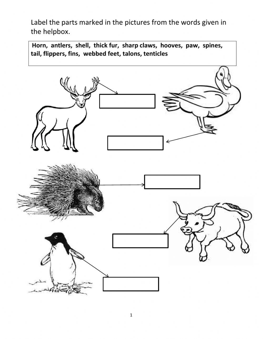 hight resolution of Animal Adaptations interactive worksheet