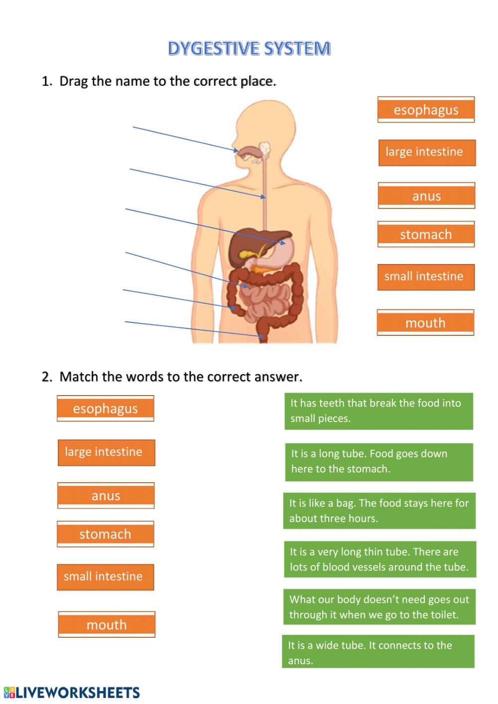medium resolution of Digestive system zsciencez exercise