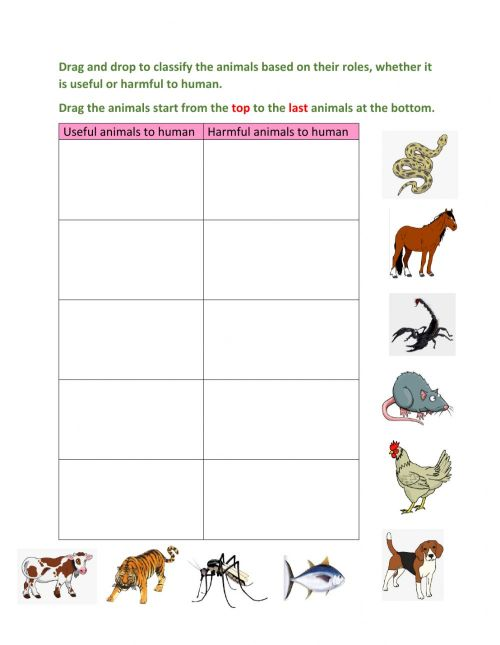 small resolution of Classify useful and harmful animals worksheet