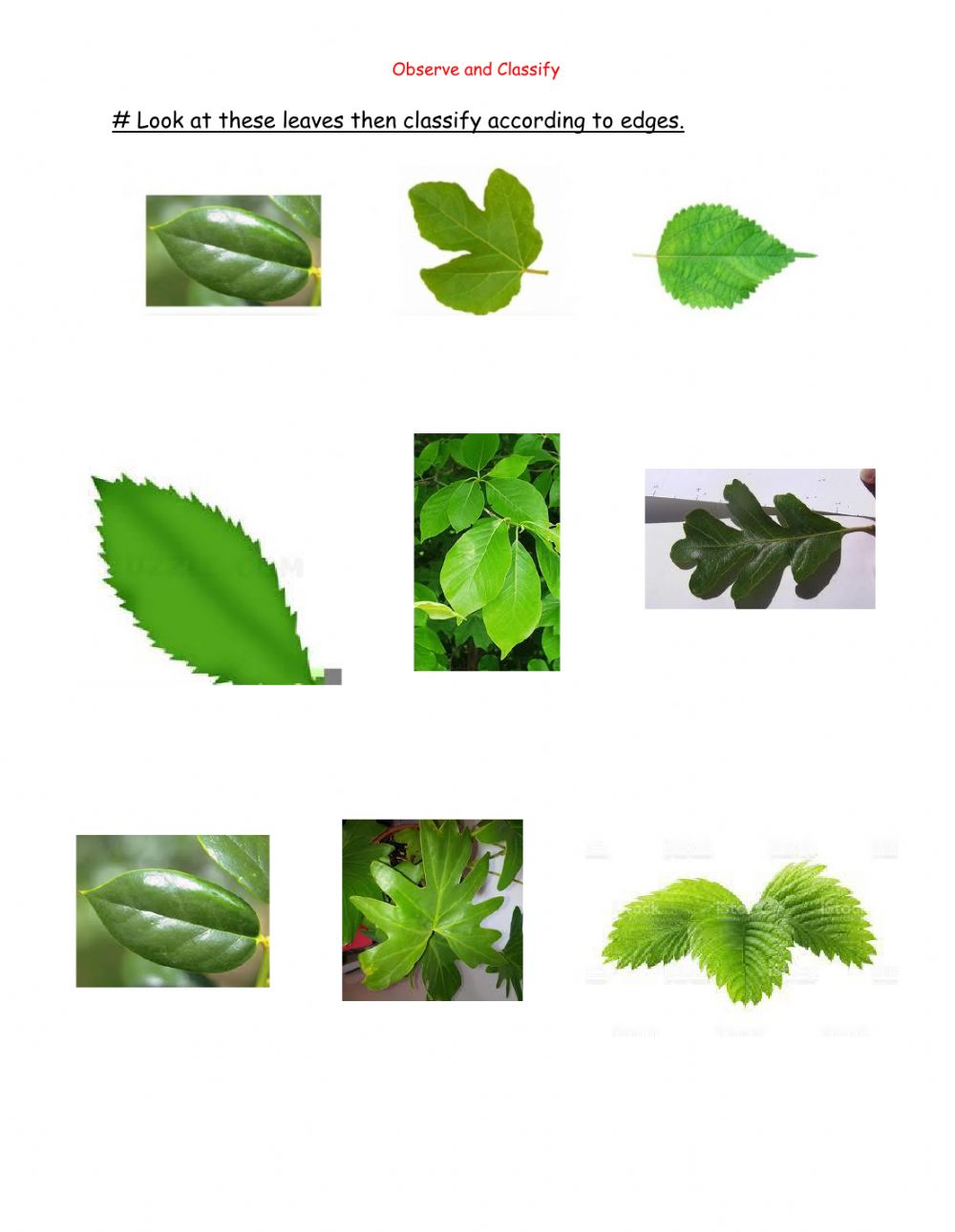 hight resolution of Leaves classification worksheet