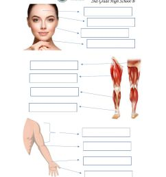 Body Parts Practice interactive worksheet [ 1291 x 1000 Pixel ]