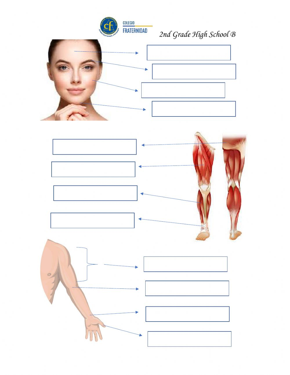medium resolution of Body Parts Practice interactive worksheet