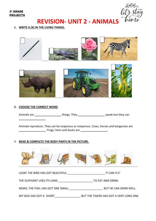 small resolution of Animal revision interactive worksheet