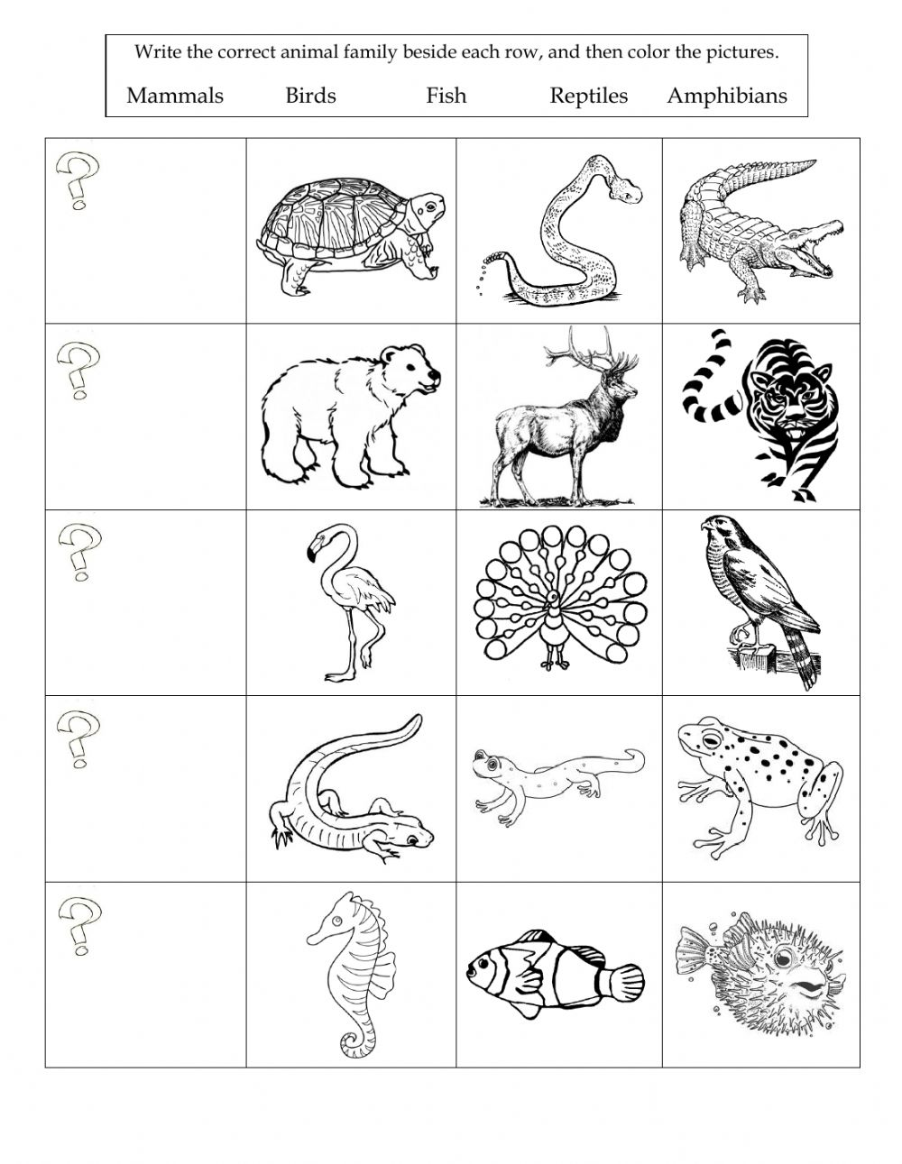 medium resolution of Animal Classification online exercise