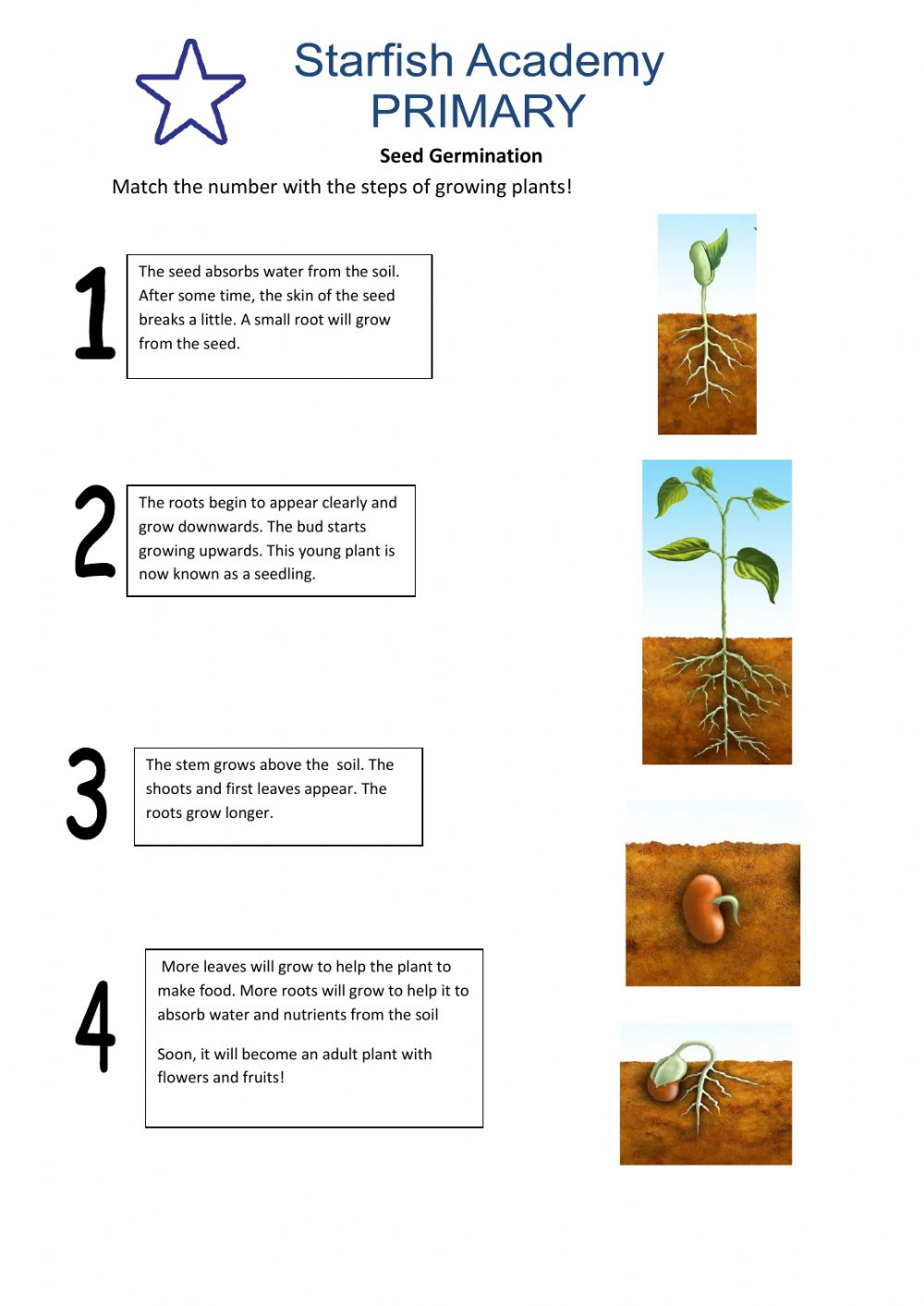 hight resolution of Seed Germination activity