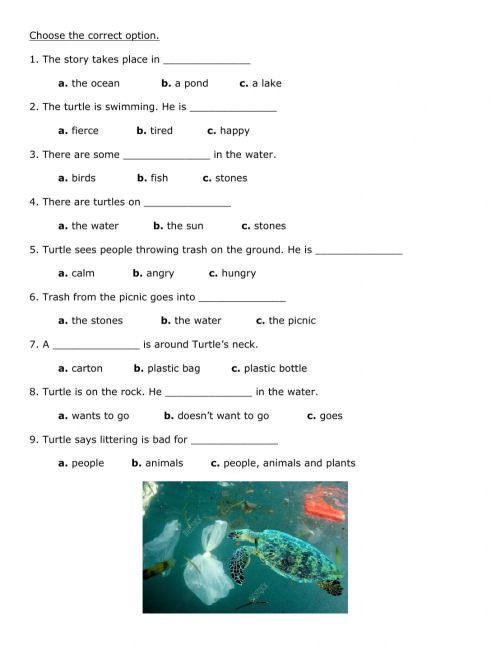 small resolution of Turtle-s Diary worksheet
