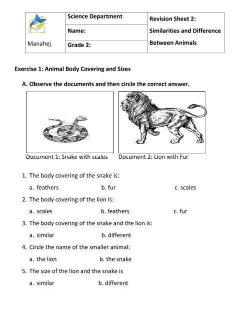 small resolution of Similarities and differences between animals worksheet