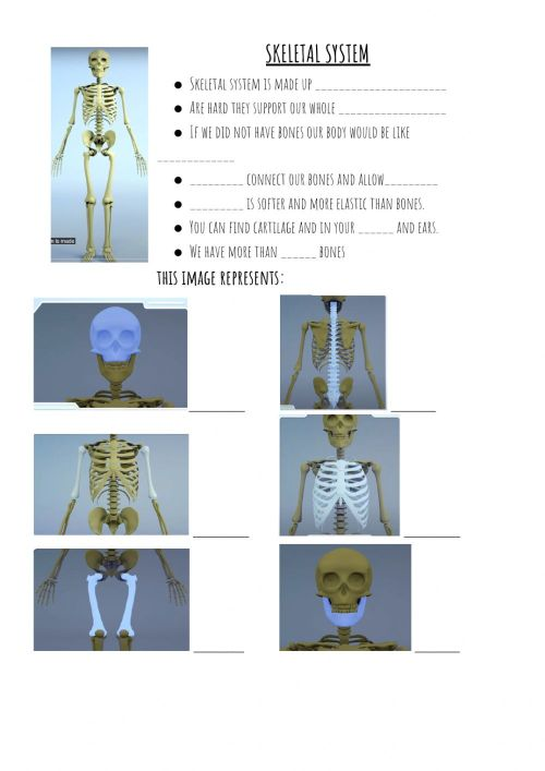 small resolution of Skeletal System online pdf exercise