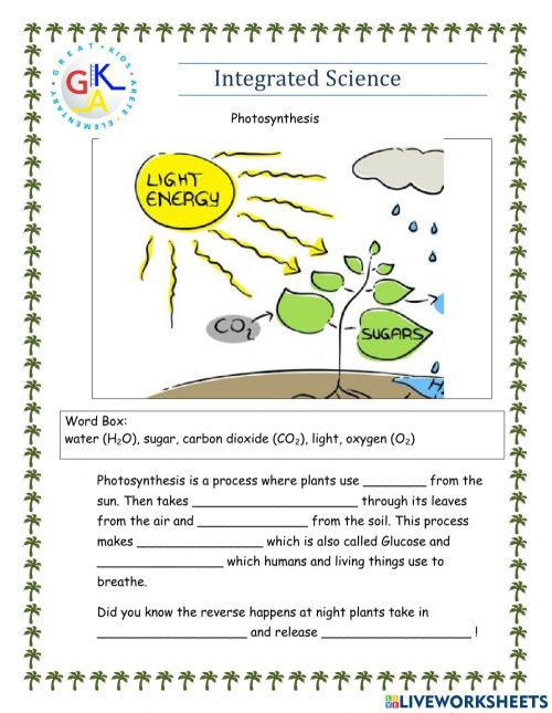 small resolution of Photosynthesis interactive exercise for Grade 1