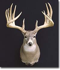 Can You Sell Deer Antlers In Ontario