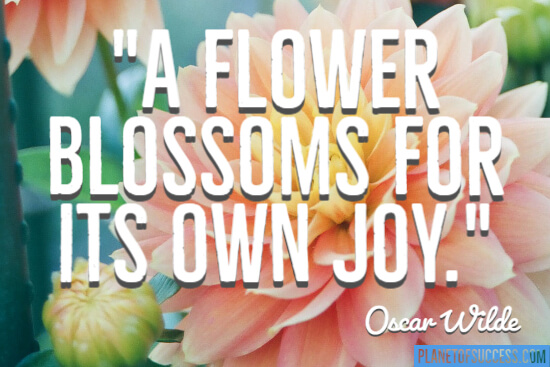 A flower blossoms quote