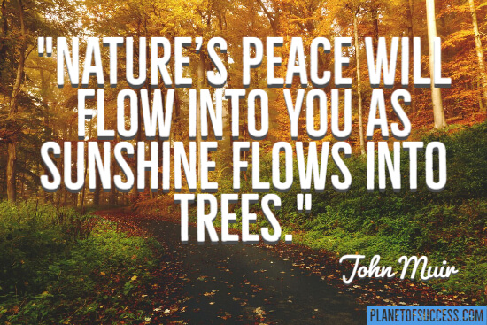 Sunshine flows into trees quote