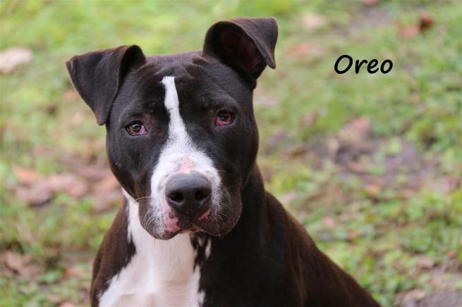 Oreo A580170 (Large)