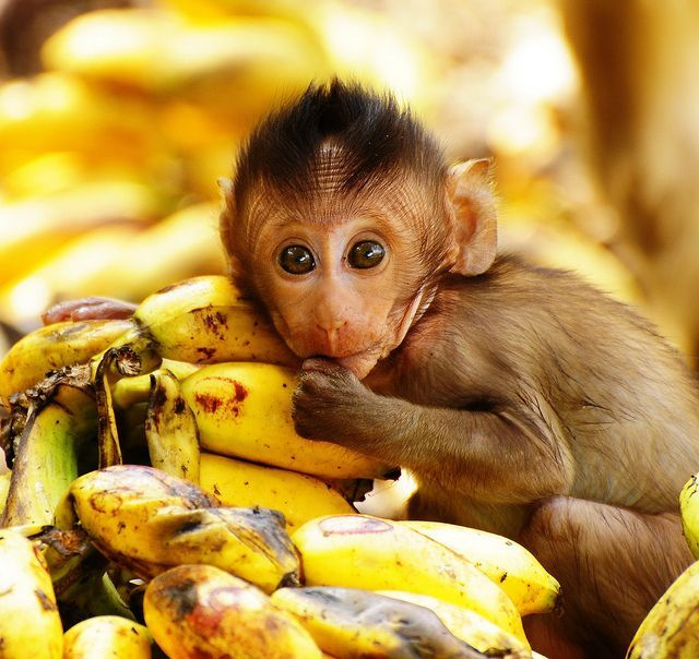 f5632e1c455fc04e37ace99911971a21  baby animals pictures cute baby animals