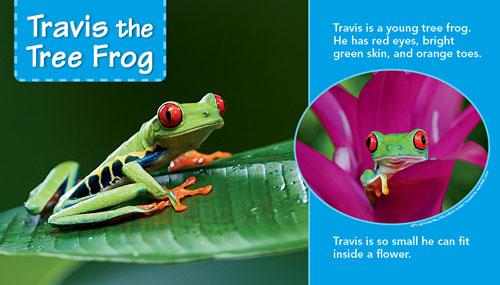 Travis Tree Frog web 500x