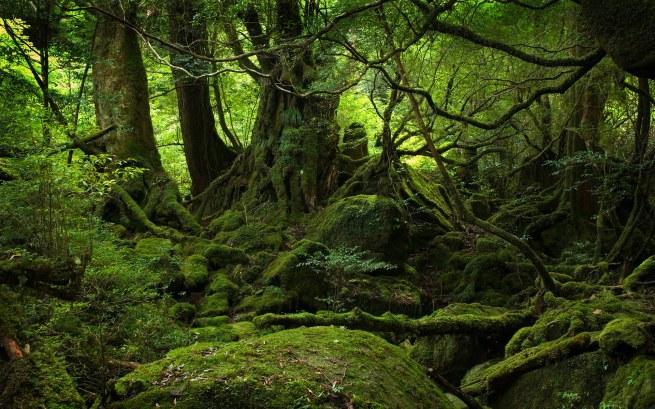 yakushima forest 1920x1200
