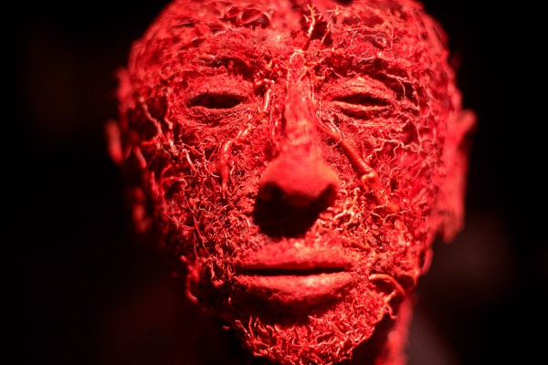 Portland' Exhibit Human Bodies Presents Anatomy Art - Portland Press Herald Maine