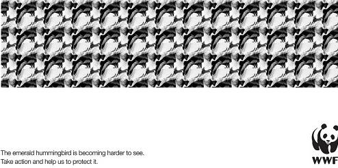WWF ad 15.07.15.jpg