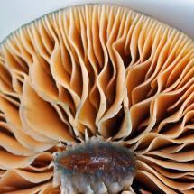Wild Mushroom Identification Minnesota - Year of Clean Water