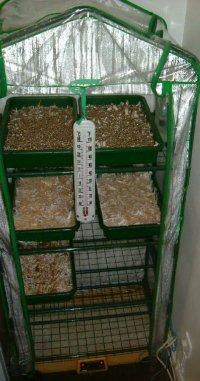Humidity Tents - Mushroom Cultivation - Shroomery Message ...