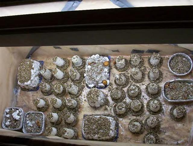 Need mushroom fruiting chamber design under 100