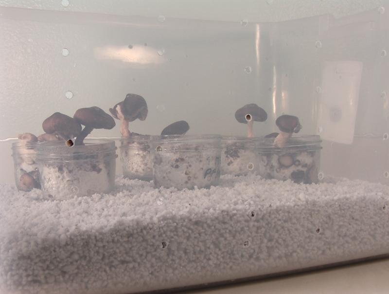 CO2 in terrarium  Mushroom Cultivation  Shroomery