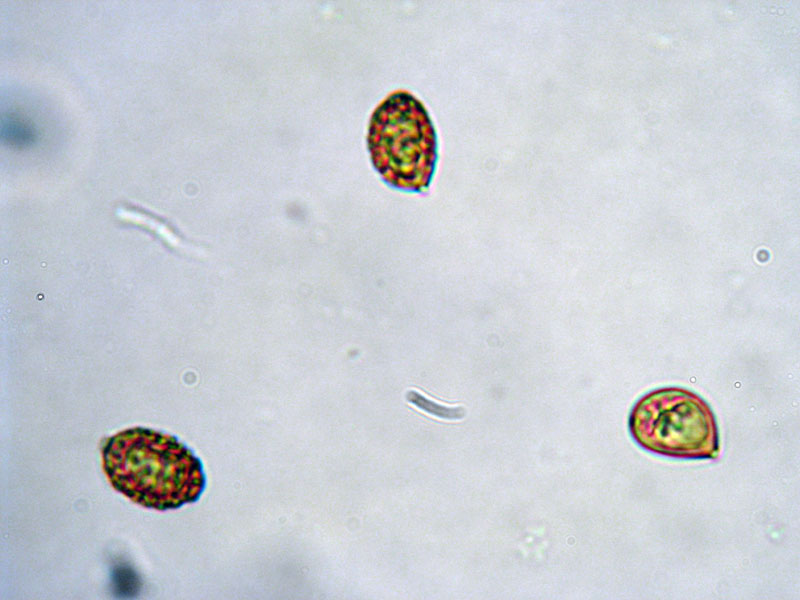 Pictures Of Random Stuff Under A Microscope. *UPDATED 3/12