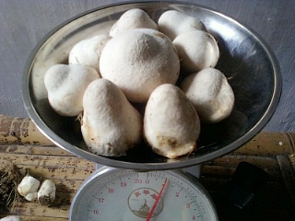Paddy Straw Mushroom and Compost QuestionsProblems