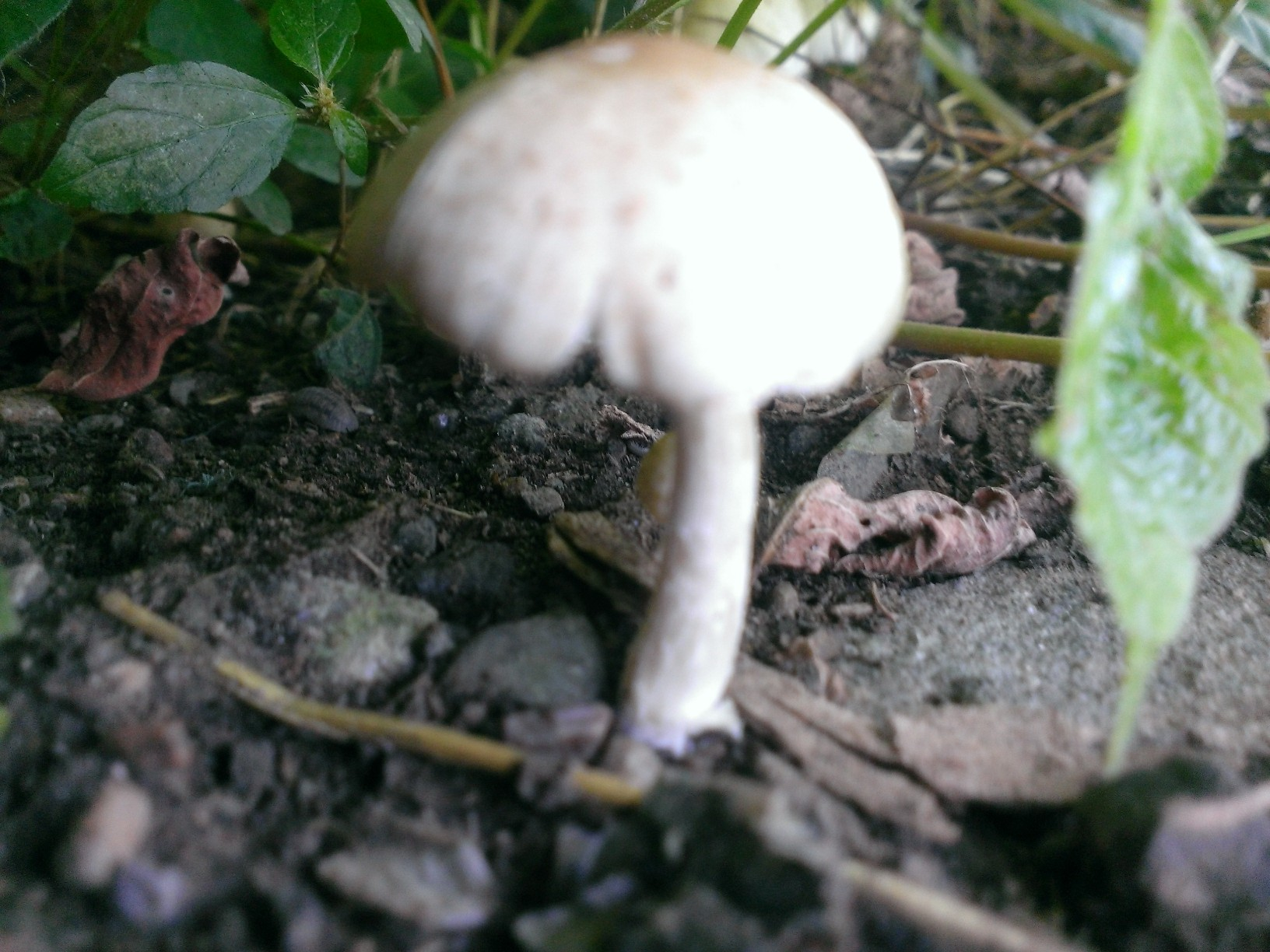 Western Pennsylvania Pittsburgh Mushroom Identification