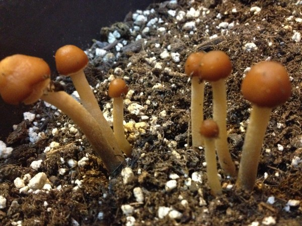 20+ Plant Soil Fungus Identification Pictures and Ideas on Weric