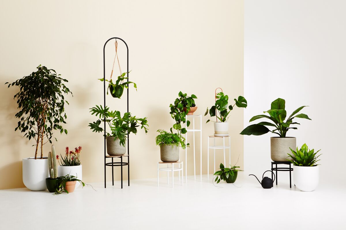 3D Printed Vases + Concrete Plant Stands: IVY MUSE's New